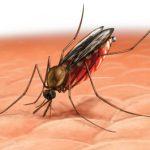 picadura mosquito zancudo